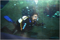 Saj Diving With The Sharks